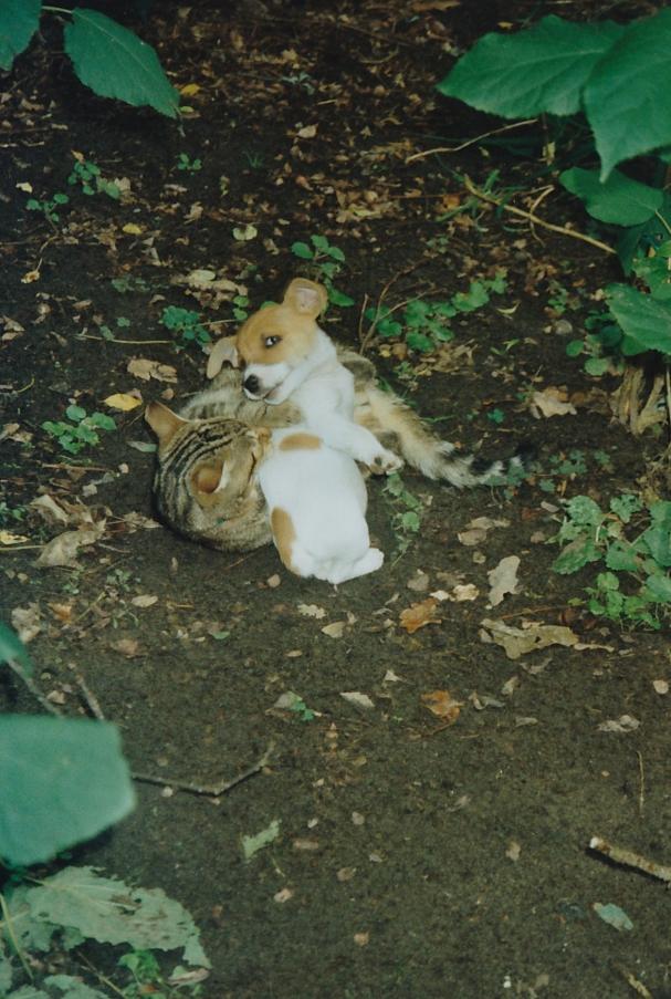 2001 Mipsie en bruintje in bos 2001