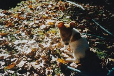 2001 Mipsie tussen blaadjes 2001
