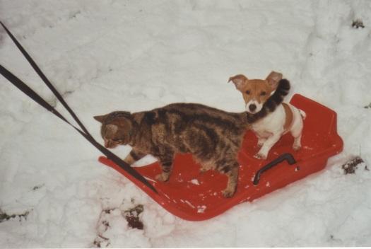 2002 januari sneeuw Mip bruintje slee